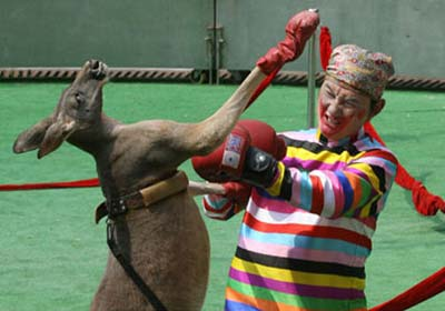 kangaroo2AFP_468x693